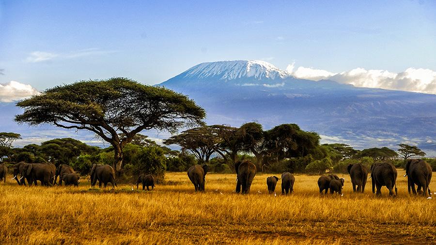 Kilimanjaro Kopie.jpg
