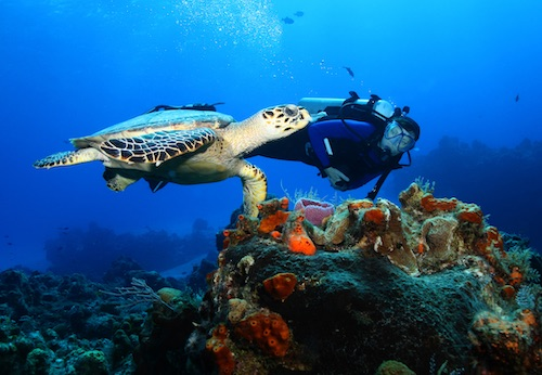 Dive into the Indian Ocean