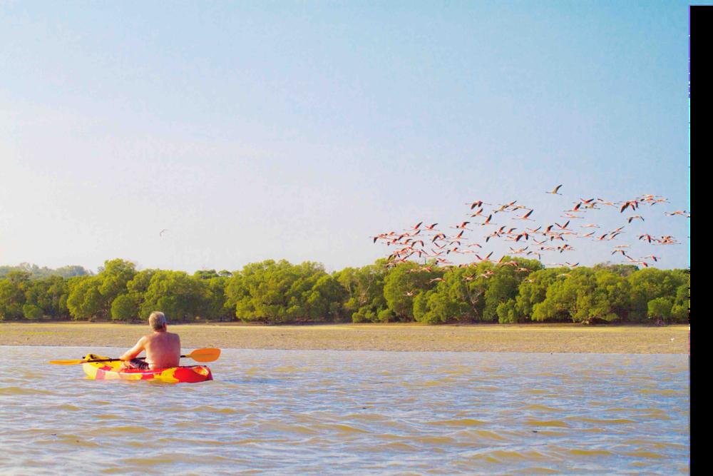 Ein Flamingoschwarm startet während Ebbe.