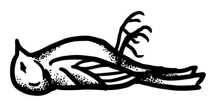 hand-drawn-sketch-of-dead-bird-vector-19477983.jpg