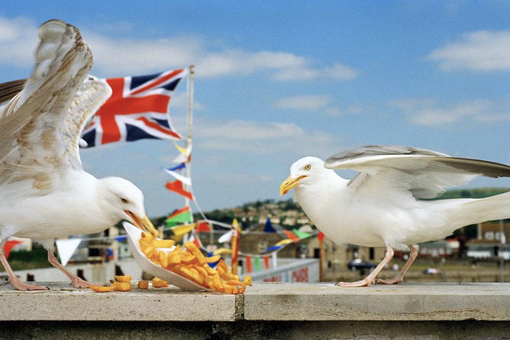 GB.-England.-Dorset.-From-West-Bay.-1996.-©-Martin-Parr-Magnum-Photos-1024x682.jpg
