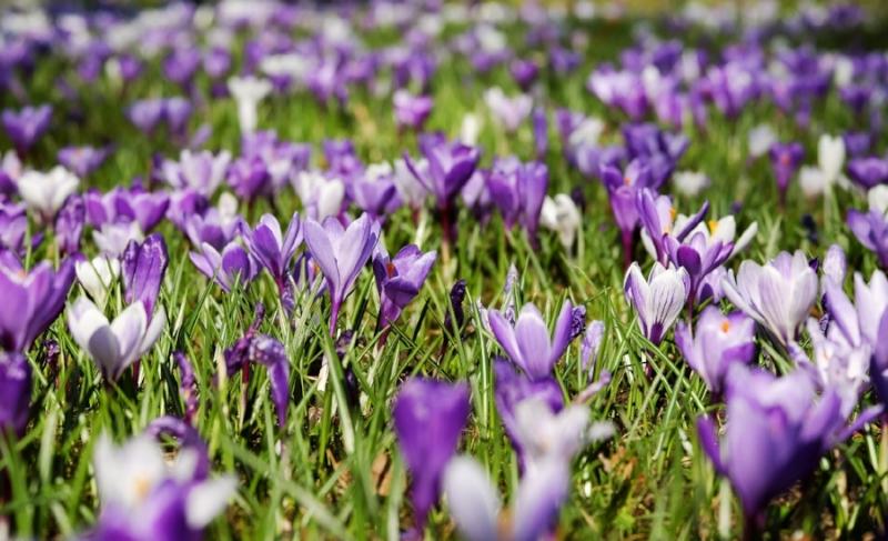 printemps.jpg