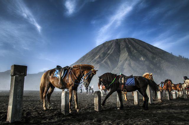 Photograph: K. Usayed
