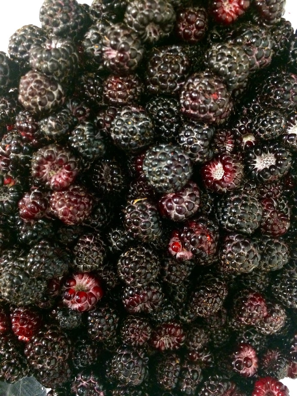 Buck's Rock farm fresh black raspberries