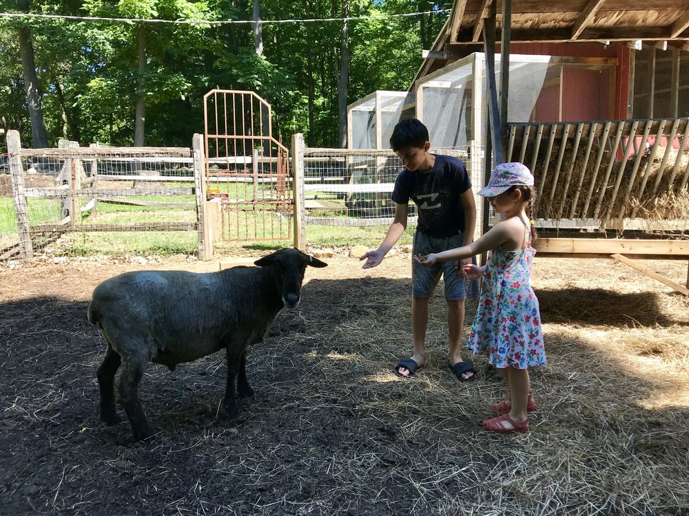 Staff kids checked on the farm animals...