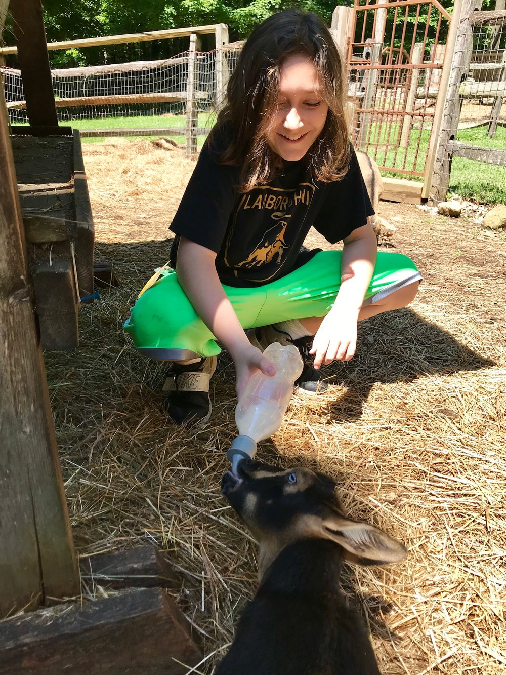 Bottle-fed the baby goats.