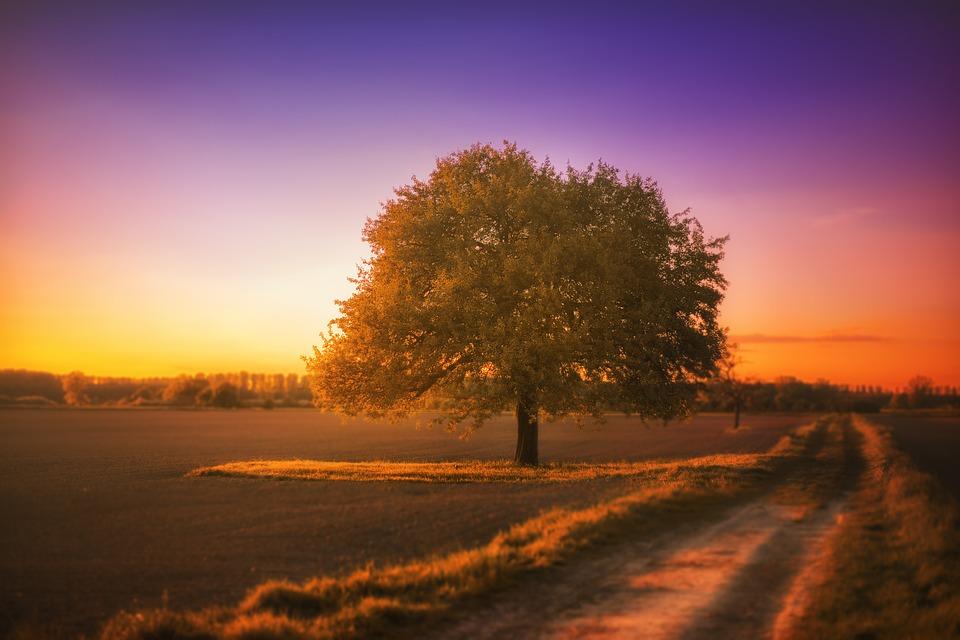 tree-1992141_960_720.jpg