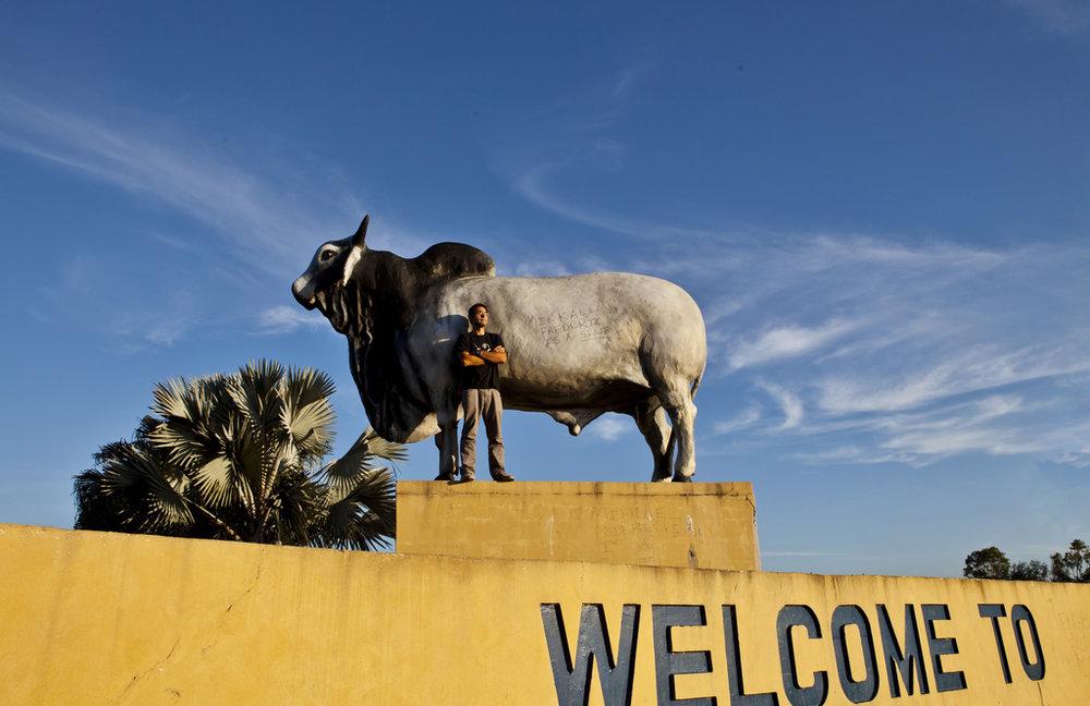The Rockhampton Bull by Jack Zalium