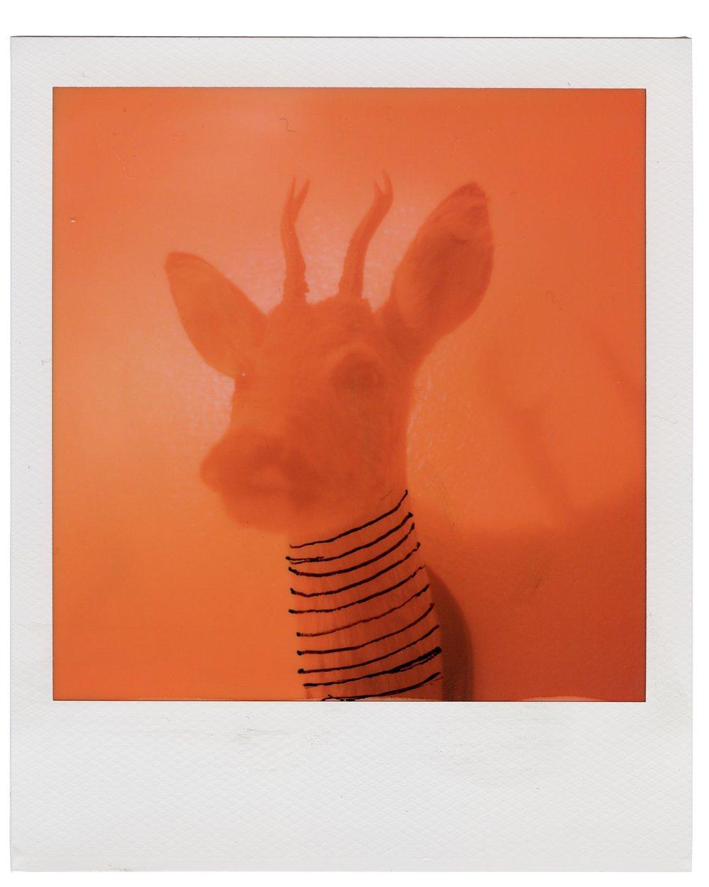 - Deer, August 6 2018 (Polaroid SX-70) Thobias Malmberg