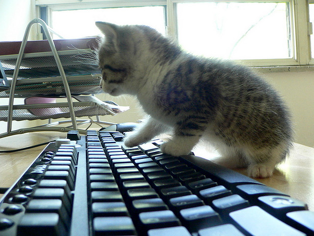 cat keyboard