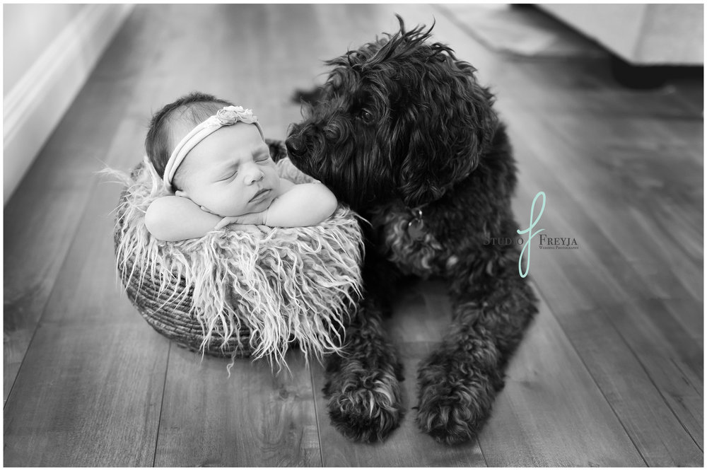 Baby Girl and her Dog during Newborn Pictures in San Diego