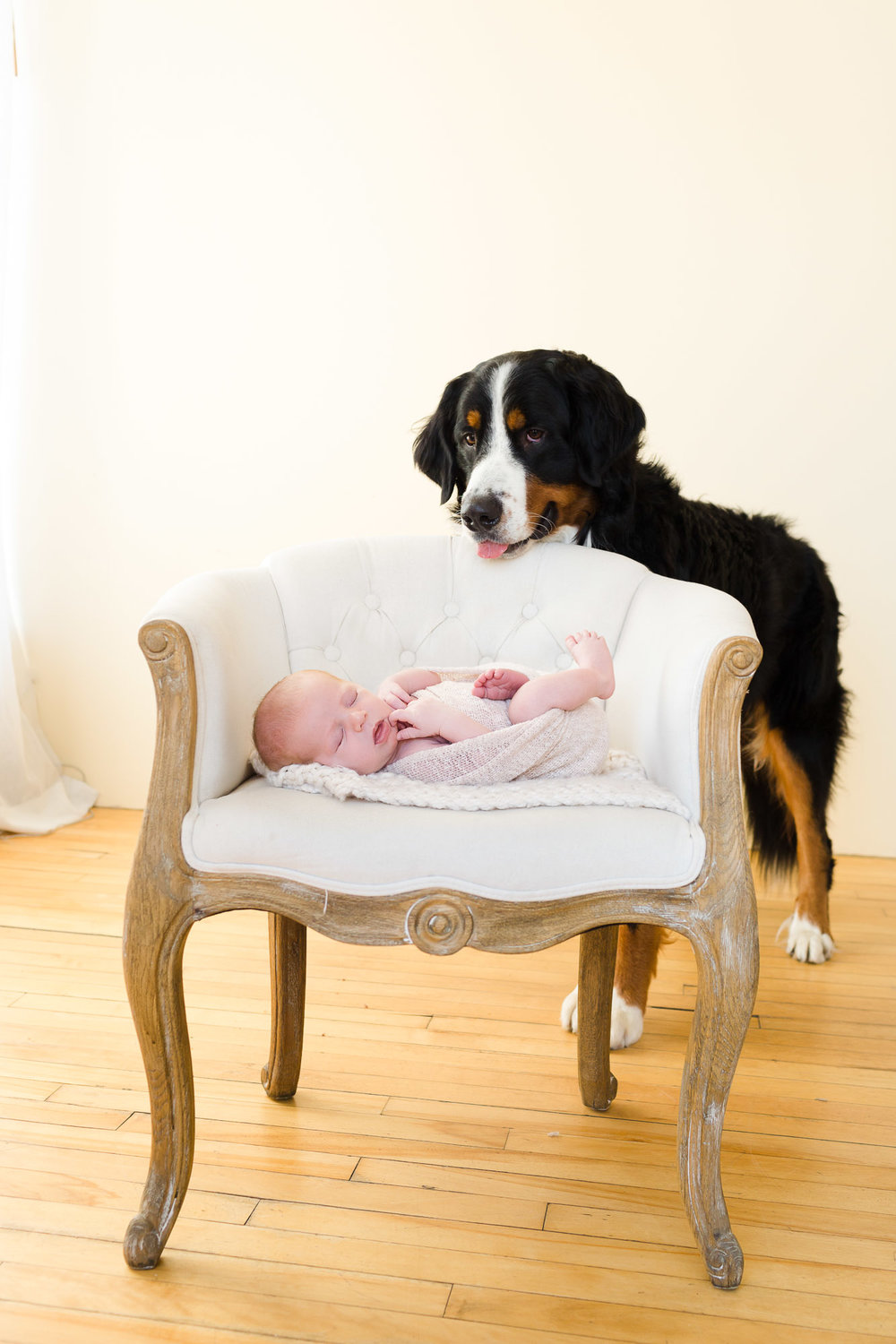 Dog and Newborn during Newborn Session in San Diego CA