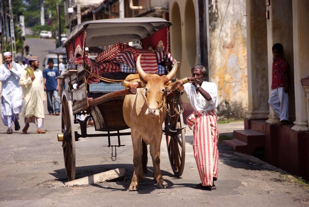 MALA-ED-ox cart onlookers.jpg