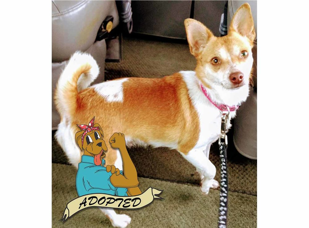 41ed21fef6d3 APRIL - National Pet ID Week (3rd WEEK in APRIL_