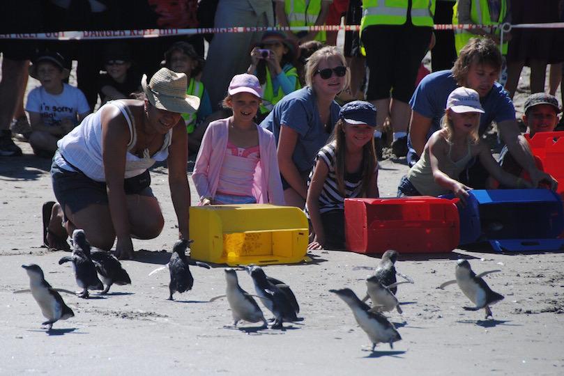 Rena Oil Spill, Tauranga NZ Penguin release