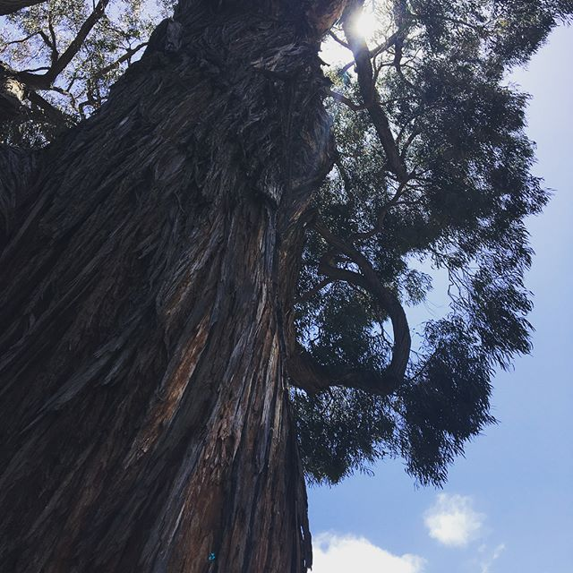 Old growth.