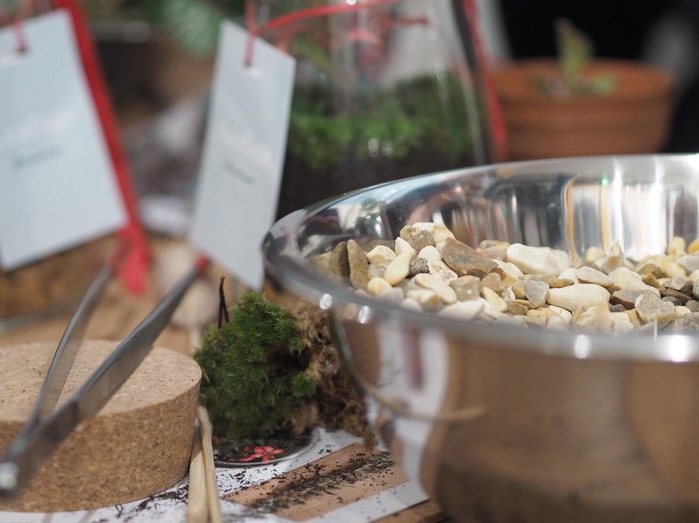Leafage Terrarium Workshop - Close Up 3