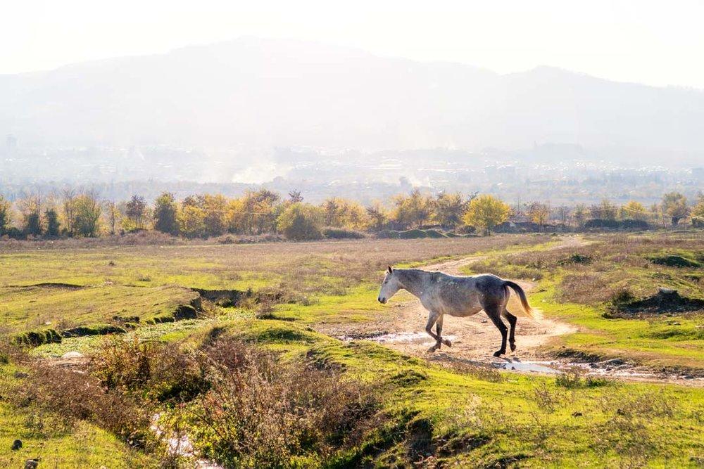 От Тбилиси до Телави - Тбилиси, Мцхета, Телави, Цинандали, Сигнахи