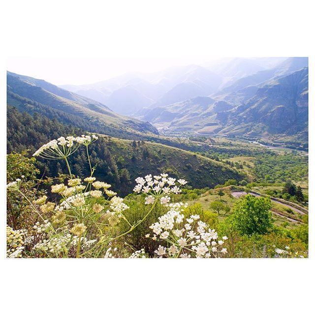 ••• 🌸🌸🌸 • • • Немного нежных грузинских гор. У нас сегодня солнечно. 👌☀️ • #природагрузии #заповедникироссии #☀️☀️☀️☀️☀️☀️☀️ #туроператормосква #туроператорспб #туроператоргрузия #экскурсиивгоры #ценыниже #отдыхнедорого #недорогиетуры #недорогиетурывгрузию