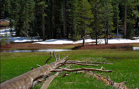 Summit meadow, Yosemite national park
