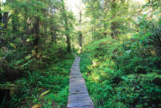 Ozette loop trail, Olympic national park