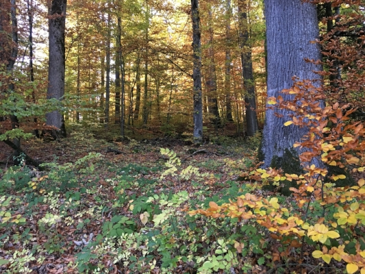 Swiss forest in Autumn