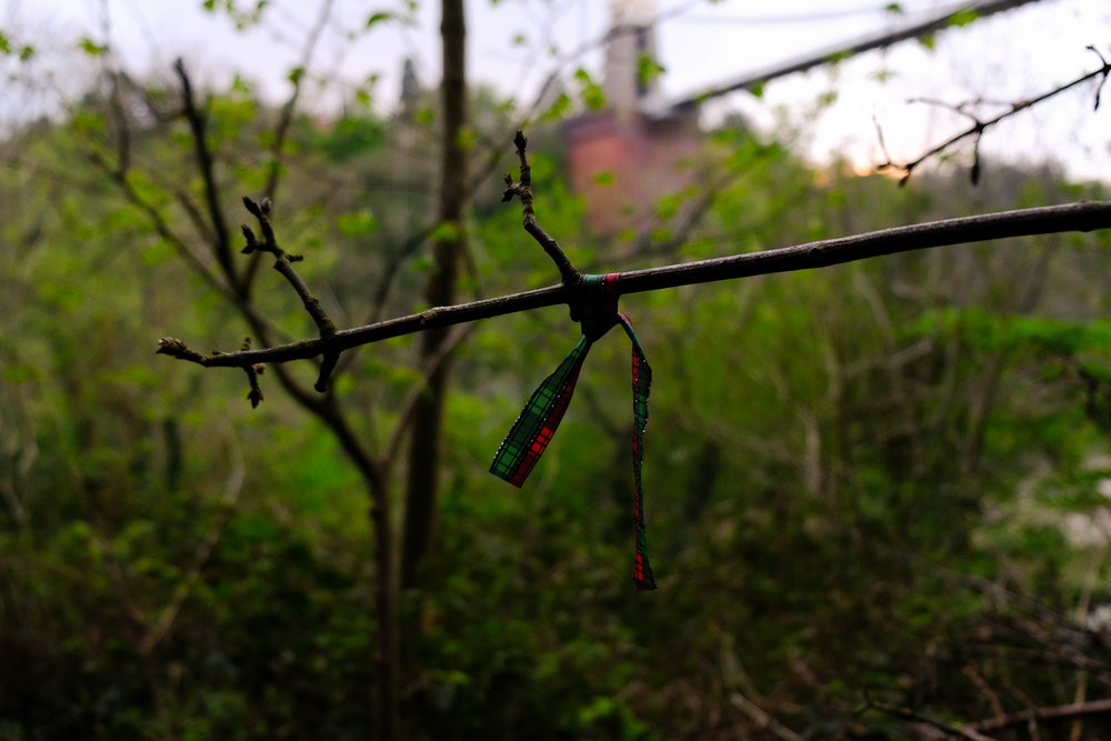ribbon01.jpg
