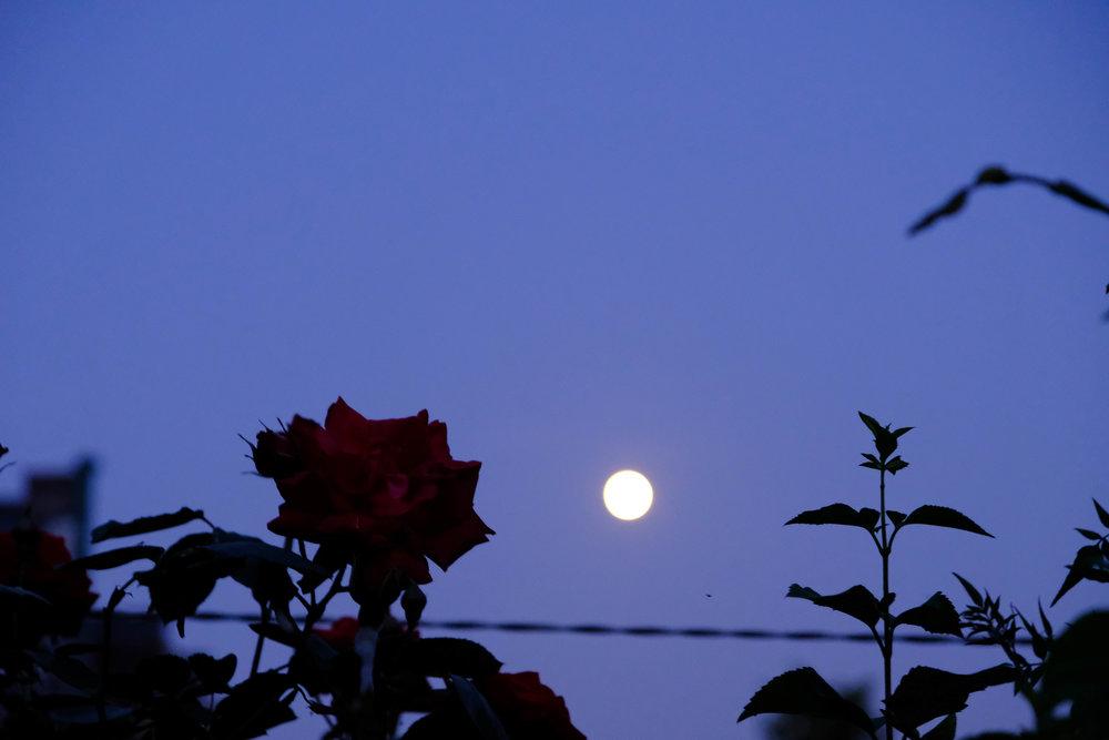 moon&may-5.jpg
