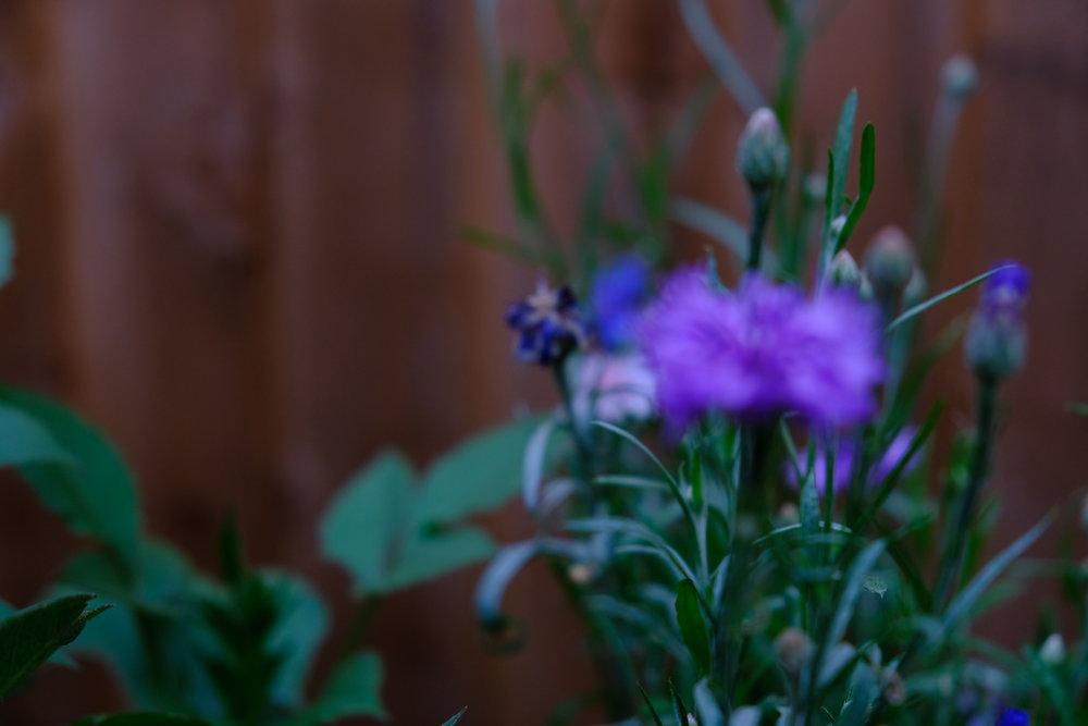 rainflower.JPG