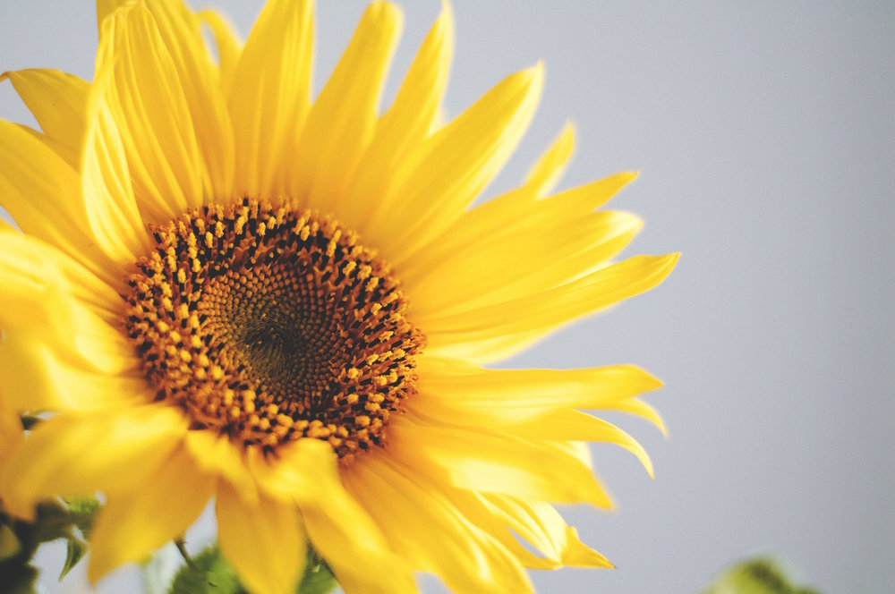What is Equipping Eve and who is Erin? - Well, for one thing, sunflowers are my favorite, but to learn more about the stuff that matters, click the button below.