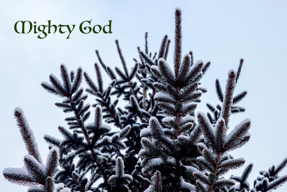 evergreen tree_mighty God.jpeg