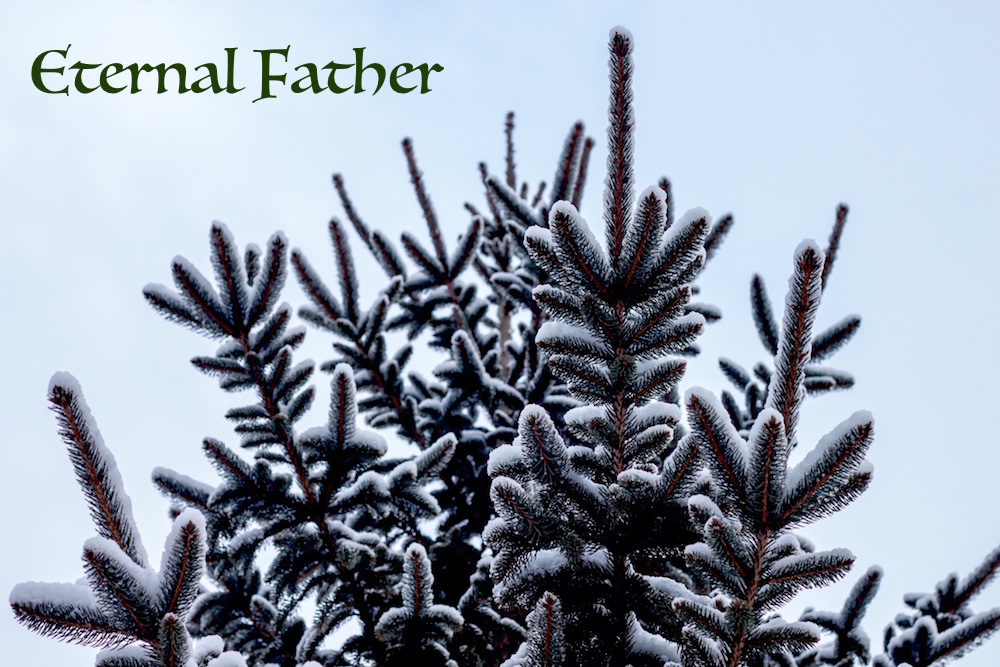 evergreen tree_eternal Father.jpeg