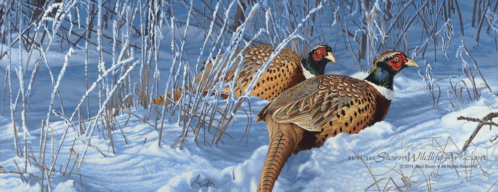 Snow Birds.jpg