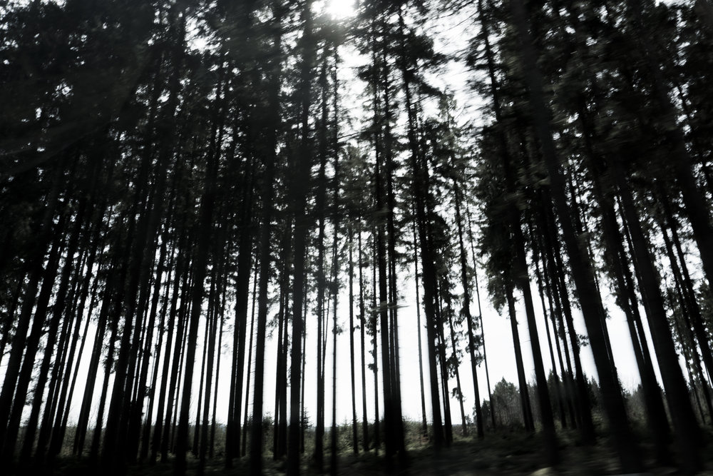 Atmosphere - .When ancient, eerie Fir Trees seem to be on armed duty to protect the Myths and Legends of the Black Forest..