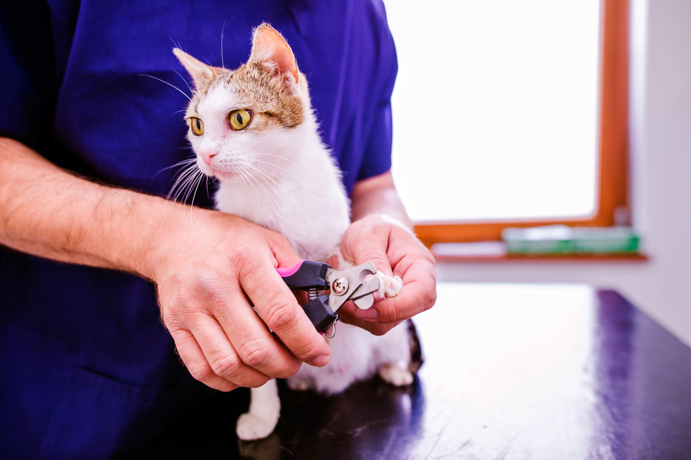 graphicstock-veterinarian-cutting-toenails-to-cute-little-kitten-in-veterinary-clinic-unrecognizable-woman-working_BOmzYmdrG-.jpg