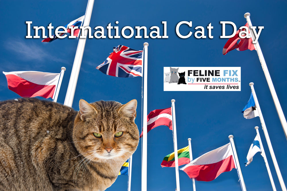 August 6 International-Cat-day-for-blog.jpg