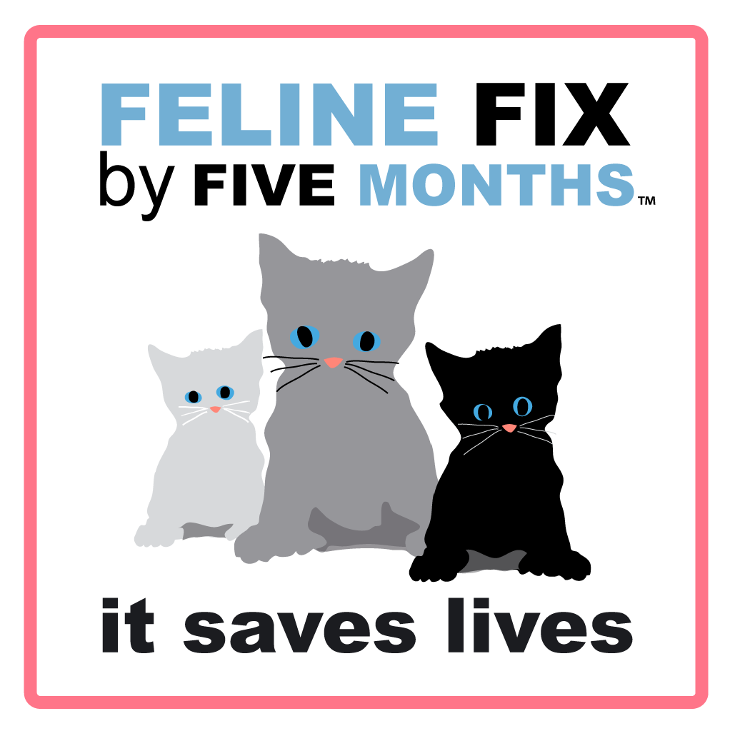 Feline Fix by Five