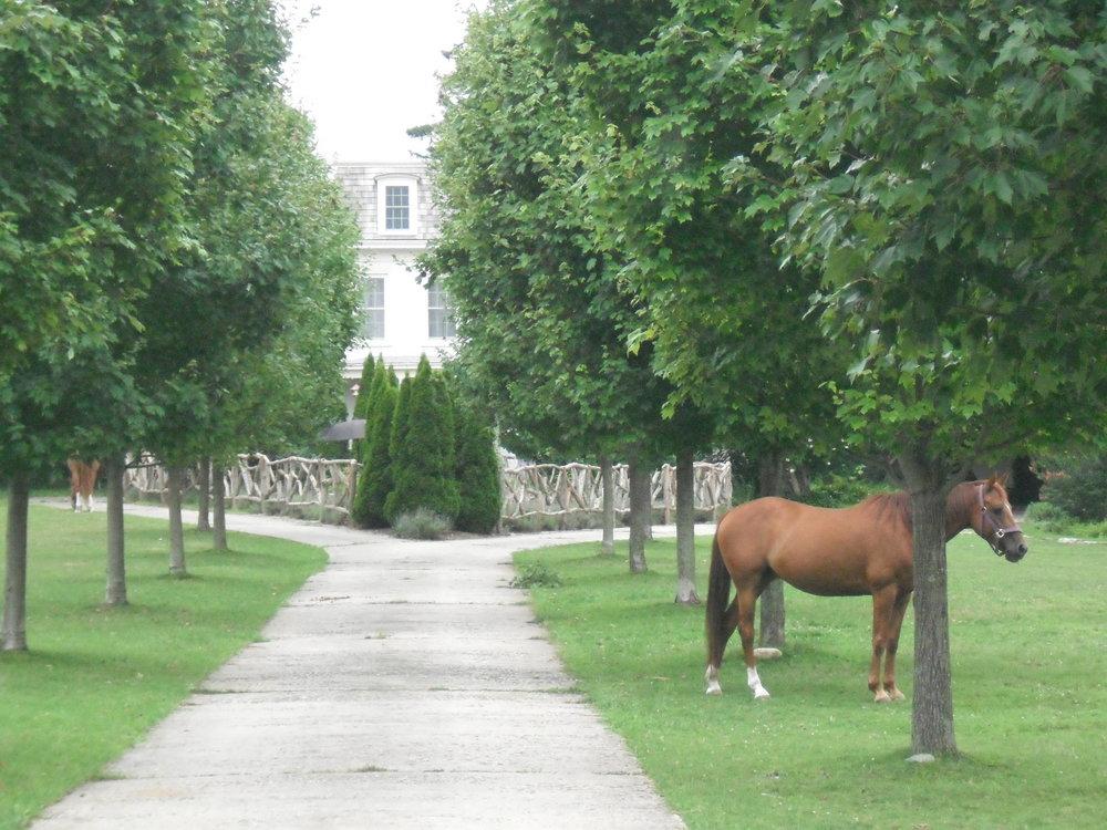 HorseGarden.JPG