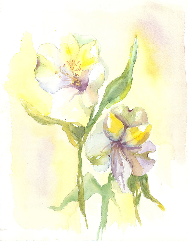 Delicate White Flowers Hillary Bott Sorrentino