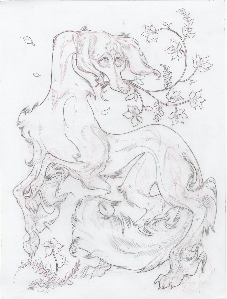 saluki sketch