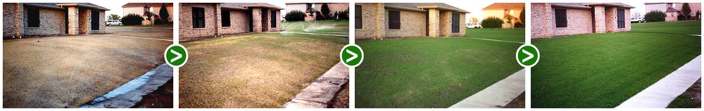 Lawn sequence.jpg