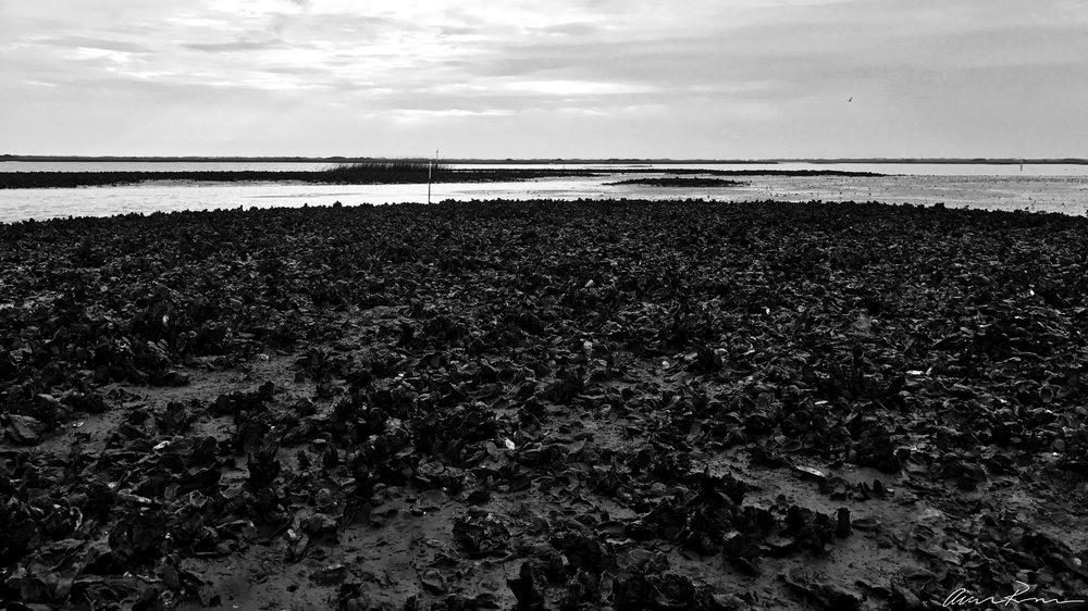 Restoration or Exploitation? Masonboro Island NERR
