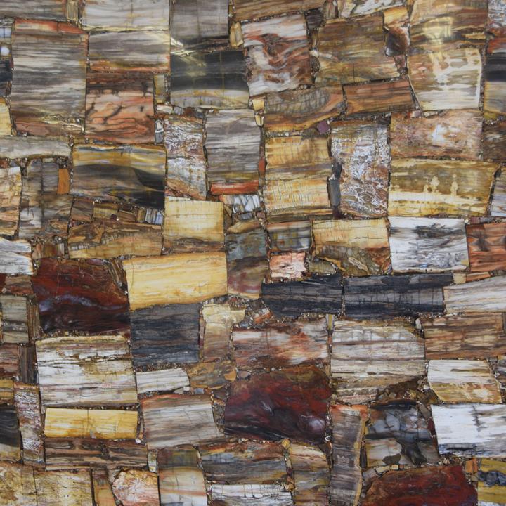 Petrified Wood (Crosscut)