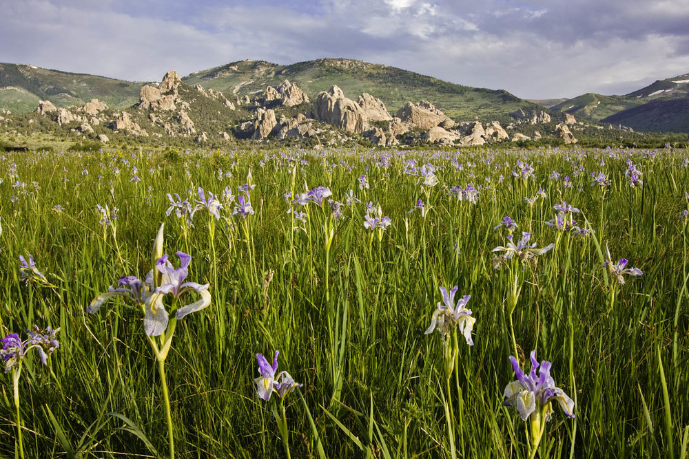 Irises and Castle Rocks State Park