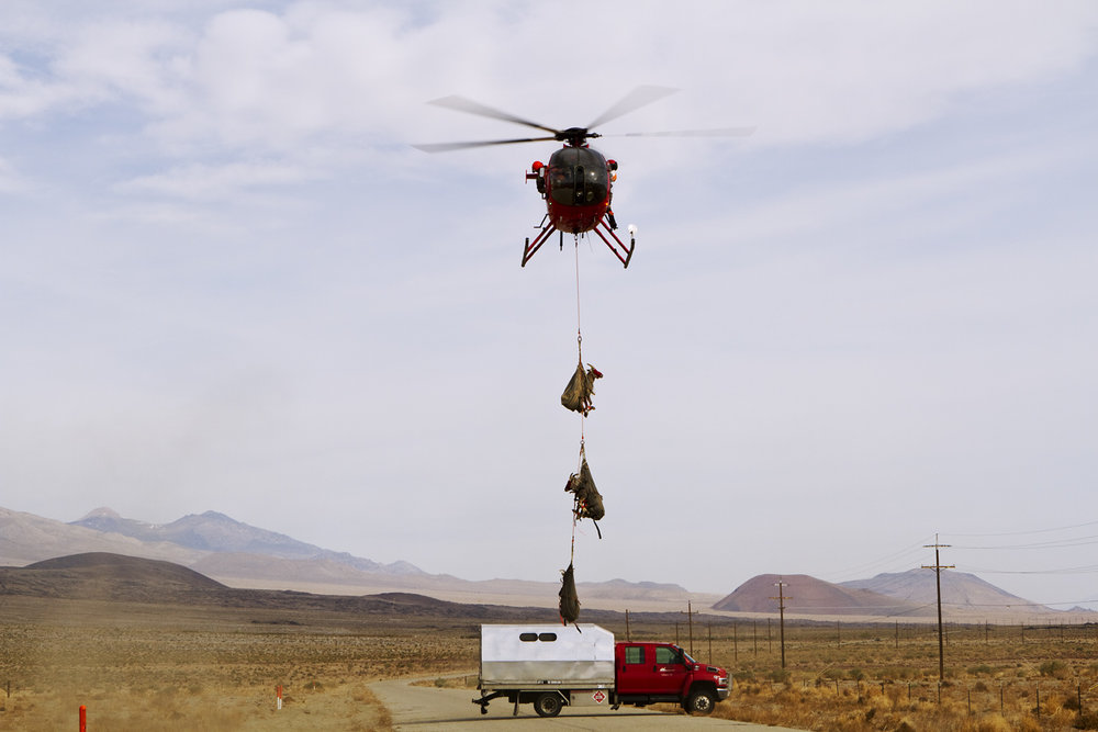Sheep in Helicopter
