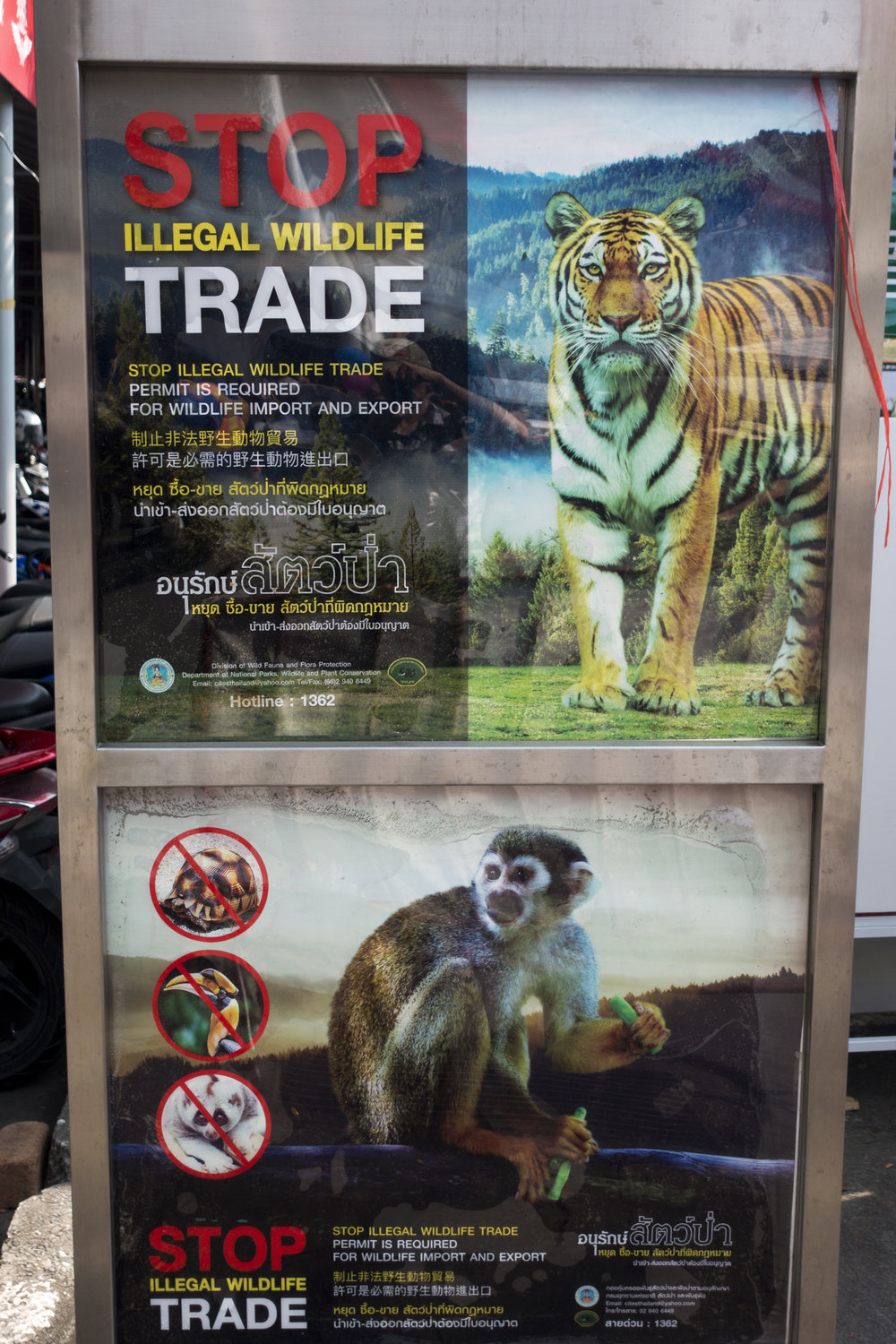 - Signs like this are hung thought the market urging tourists not to buy ivory or endangered animals. These signs are relatively recent, and are due in part by efforts of a NGO group known as Freeland. It is Freeland's goal to protect vulnerable wildlife and people from organized crime and corruption. Headquartered in Bangkok, I met with their Communications Director, Matthew Pritchett. I asked him of the progress that has been made in stopping the illegal animal trade and what hurdles still remain. He was both optimistic and realistic, relating the good progress that has been made in recent years and acknowledging the shortfalls and gaps that still remain.