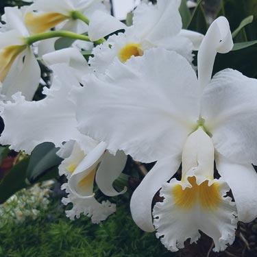 - plants & orchids