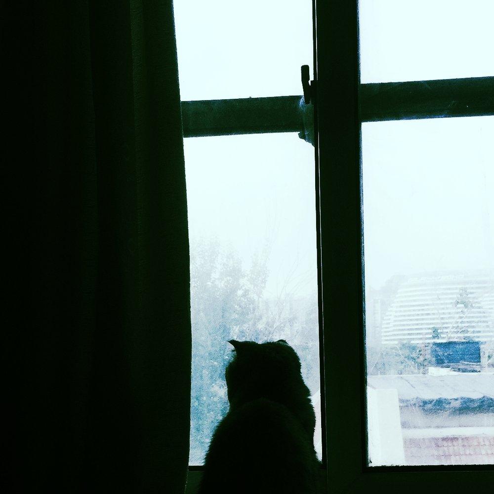 She watches bird