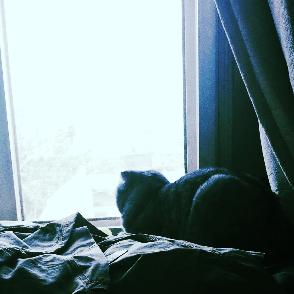 watches birds again