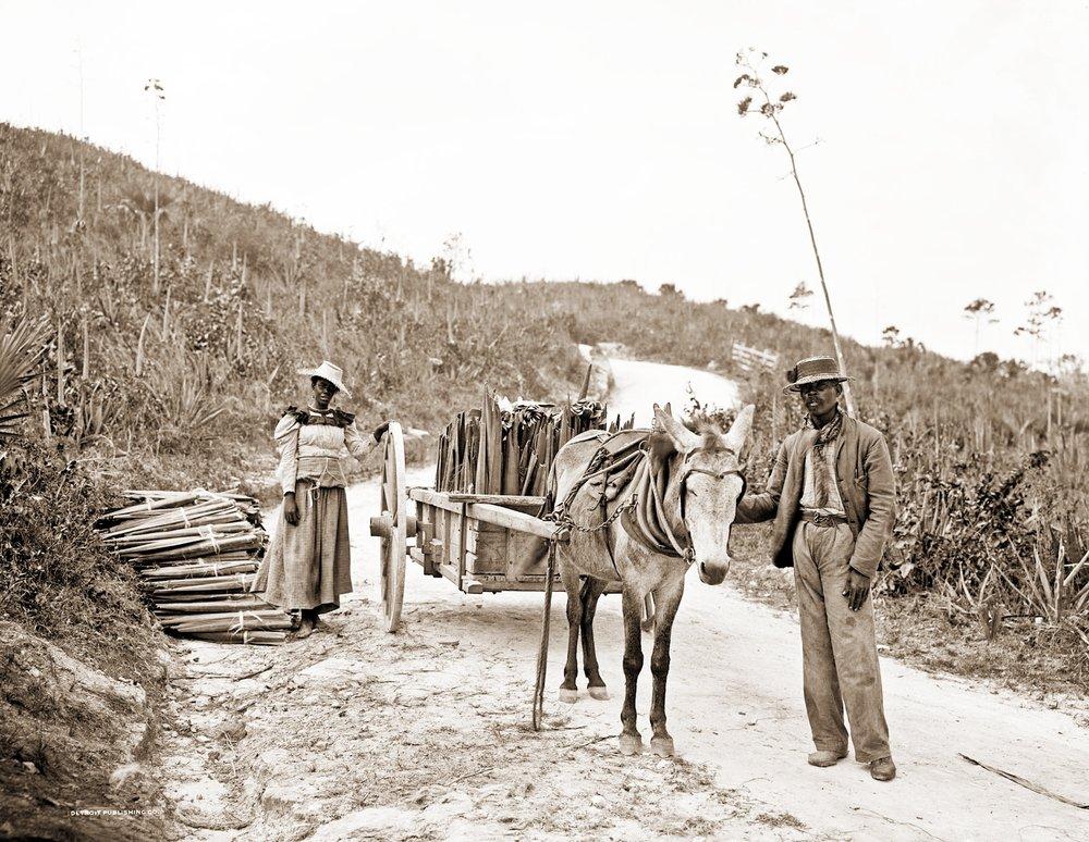 """""""Gathering sisal, Nassau, Bahamas, 1900"""" - William Henry Jackson"""